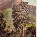 Postkarte Table Mountain gelaufen 1903 nach Hamburg