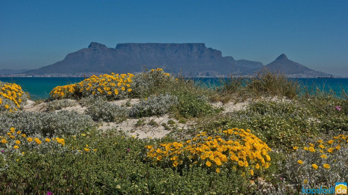 Table Mountain from Bloubergstrand in spring
