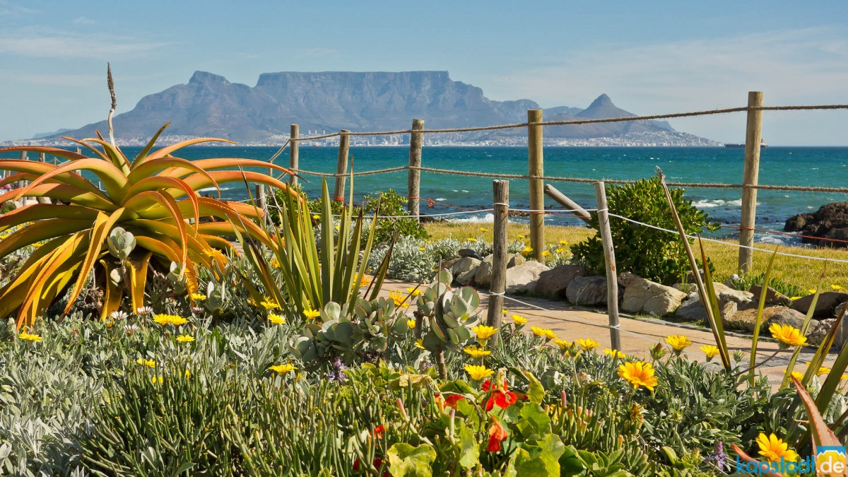 Spring flowers at Bloubergstrand