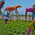 Mooieberge Farm Stall near Stellenbosch