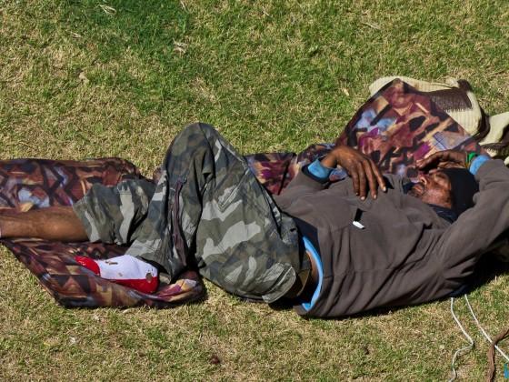 Bergie sleeping in the park