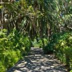 Company's Garden in Cape Town