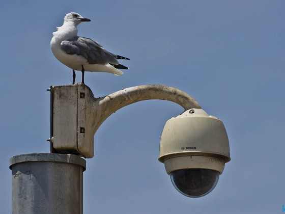 Security camera and a seagull