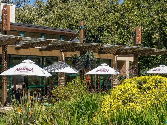 Kirstenbosch Botanical Garden - Moyo Restaurant