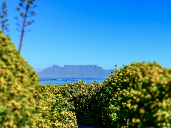 Yellow flowering at Blouberstrand (image experiment)