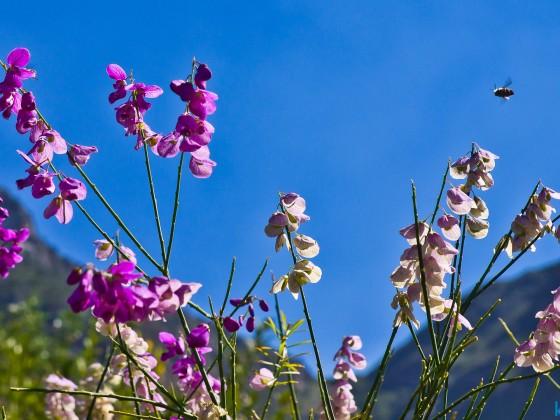 Kirstenbosch Botanical Garden