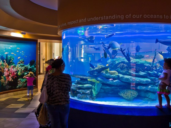 Two Oceans Aquarium at the V&A Waterfront