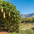 Babylonstoren Wine Estate, Hotel and Garden in Simondium near Stellenbosch