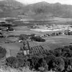 Wine farm Laborie, Paarl, c1953