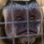 Monkey Town Primate Centre in Somerset West