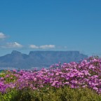 Spring time at Bloubergstrand