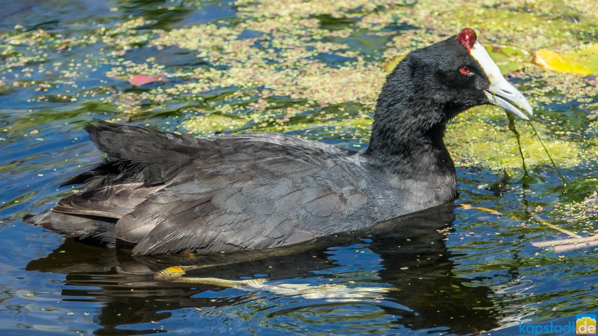 Intaka Island Bird Sanctuary in Milnerton