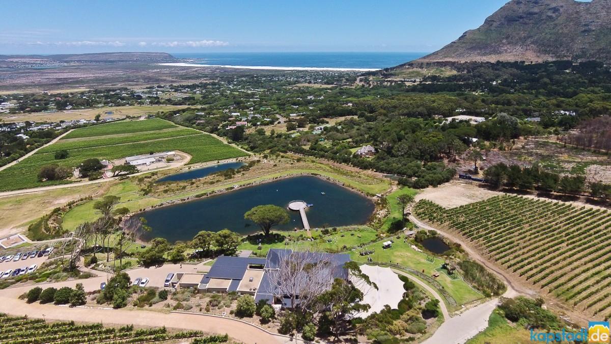 "Aerial image of ""Cape Point Vineyards"" with their restaurant in Noordhoek"