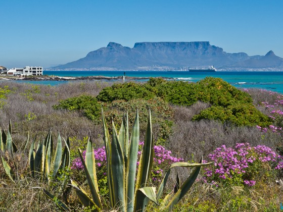 Table Mountain from Big Bay in spring