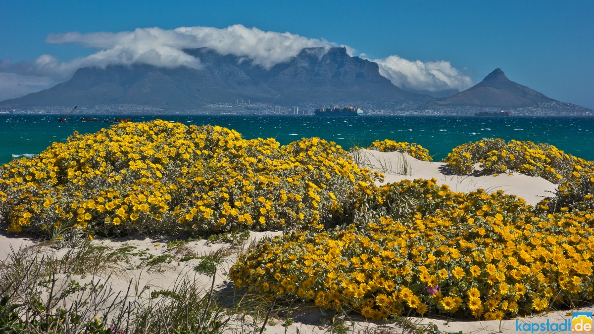 Spring in Cape Town from Bloubergstrand
