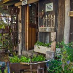 Plant nursery in Hout Bay