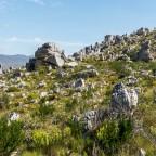 Ceres Rail Company (cRc): Cape Town to Elgin (Railway Market)