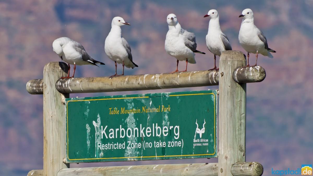 Board Karbonkelberg in Hout Bay