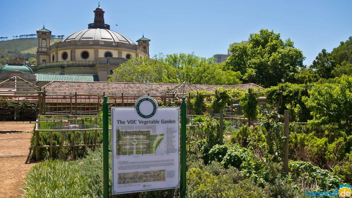 The Vegetable Garden in the Company's Garden
