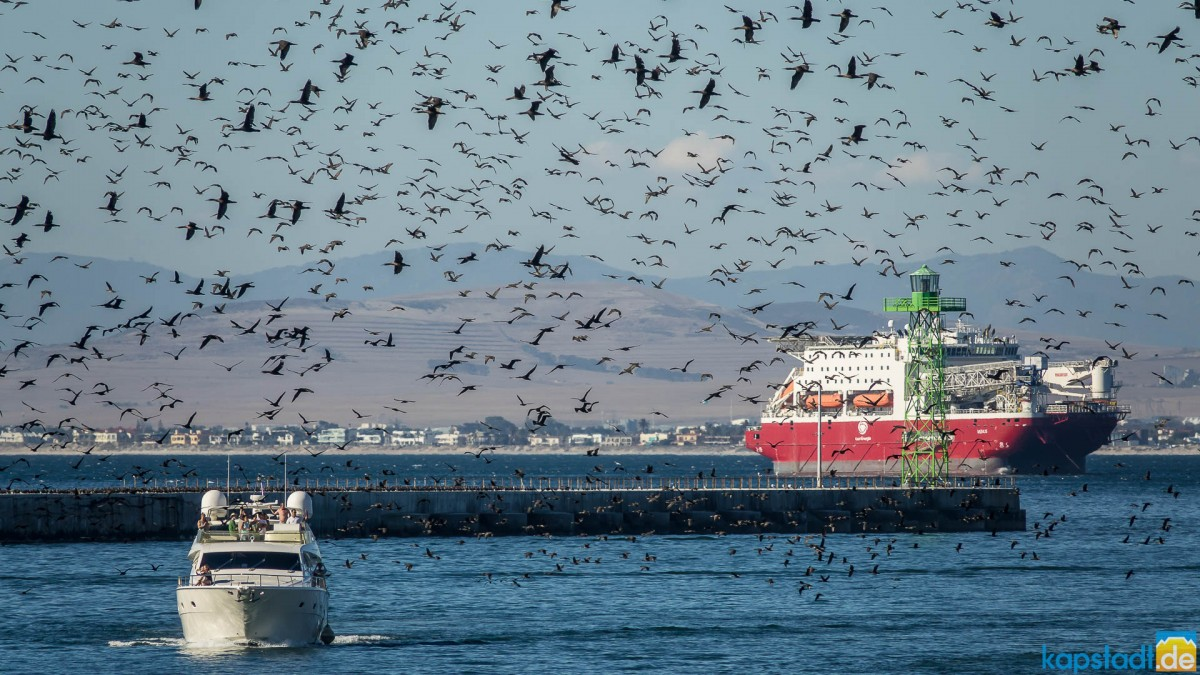 V&A Waterfront harbour entrance with lots of seabirds