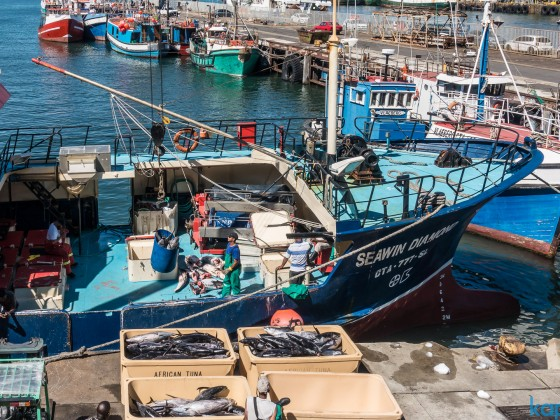 African Tuna fisher boat unloading at the V&A Waterfront