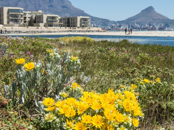 Lagoon Beach in Milnerton in spring