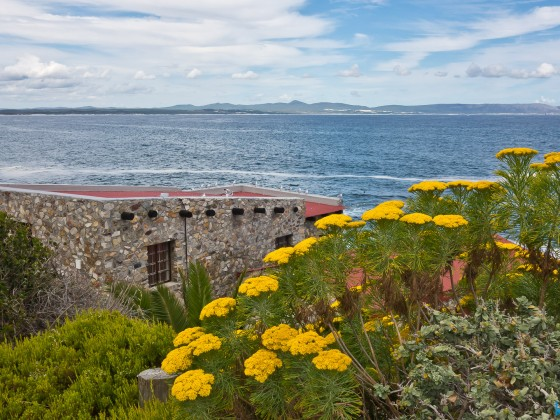 Impressions from Hermanus in the Overberg Region