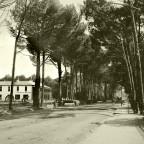 Main Rd. Wynberg c1902