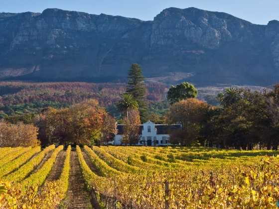 Buitenverwachting Wine Farm in Constantia