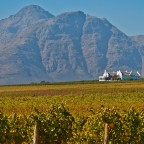 Images from Stellenbosch