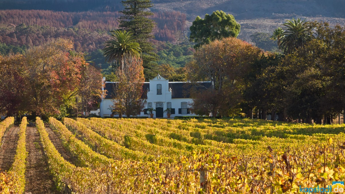 Buitenverwachting Wine Farm in Constantia