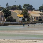 Crabfisher in the Milnerton Lagoon