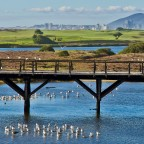 "Old wooden bridge of ""Woodbridge Island"""
