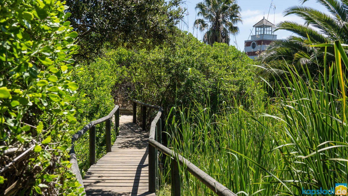Intaka Island Bird Sanctuary in Milnerton